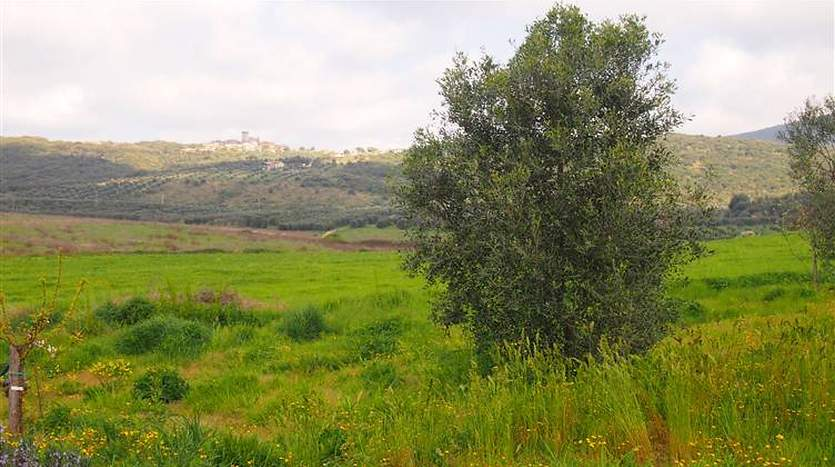 capalbio-grosseto-tuscany-farmagricultural-land-for-sale
