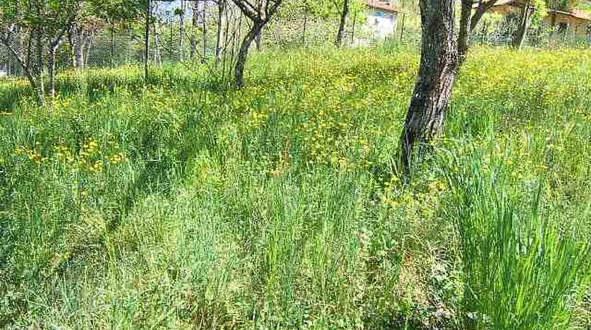 villafranca-in-lunigiana-massa-carrara-tuscany-industrialbuilding-land-for-sale