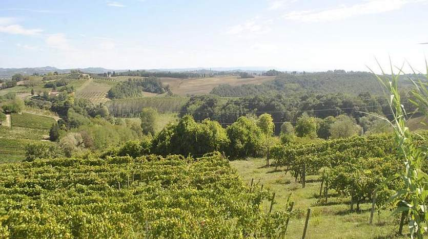 terricciola-pisa-tuscany-farmagricultural-land-for-sale