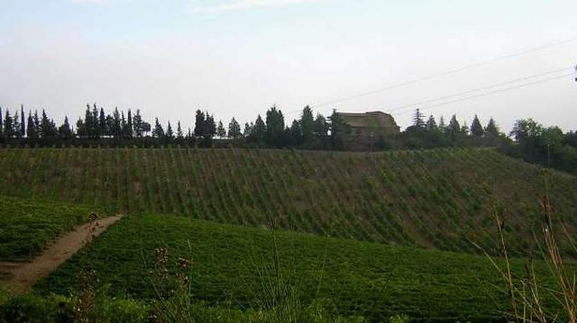 murlo-siena-tuscany-farmagricultural-land-for-sale
