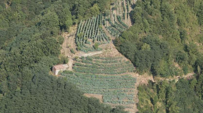 barga-lucca-tuscany-farmagricultural-land-for-sale
